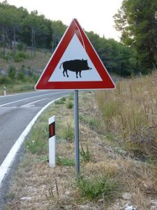 peligro jabalí carretera señal